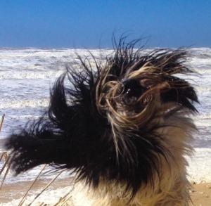 Een Duvel van goud: winnaar van de Facebook Kunstlijn Hond Verkiezing