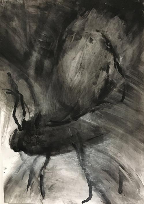 Aureen Harthoorn